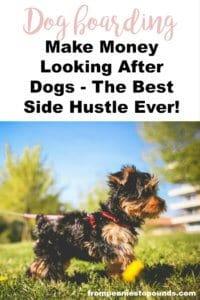 Dog boarding side hustle make money